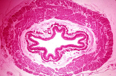 gi histology pre lab questions Pre-lab exercise introduction how to abdomen and pelvis / gi and ug embryology lab: abdomen and pelvis lab 11 head and neck anatomy and development lab.